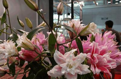 Три точки продажи цветов работают в районе Бирюлево Западное