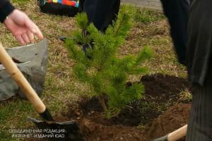 Работы по озеленению в ЮАО
