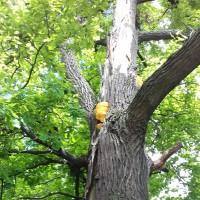 Грибы на дереве в Бирюлеве Западном