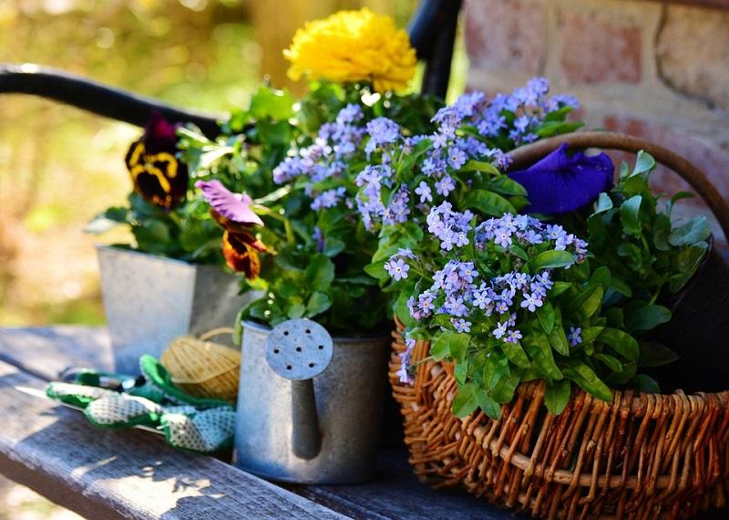 пиксабай цветы сад